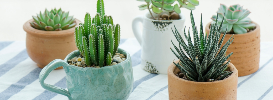 Cactus facebook cover